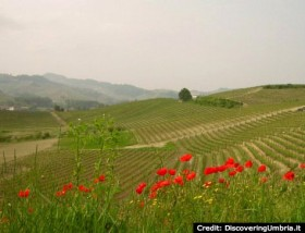 Piemonte: Vines at the foot of the mountain