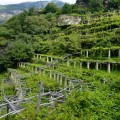 Sentiero dei Vigneti - The Vineyards Trail in Piedmont | BrowsingItaly.com
