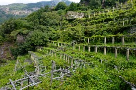 Hiking in Carema's Terraced Vineyards in Piedmont