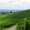 Vineyards in the Langhe | Italy Show and Tell: Monforte d'Alba, Piedmont | BrowsingItaly.com
