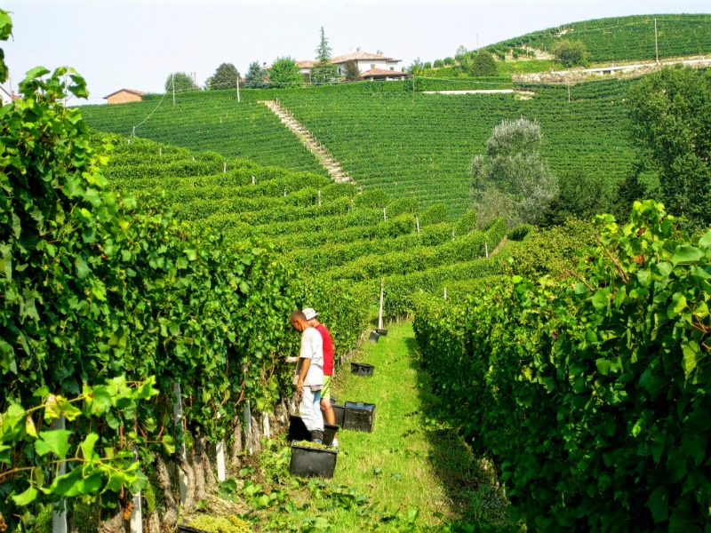 7 Italy Wine Travel Hacks for Wine Travelers and Wine Lovers