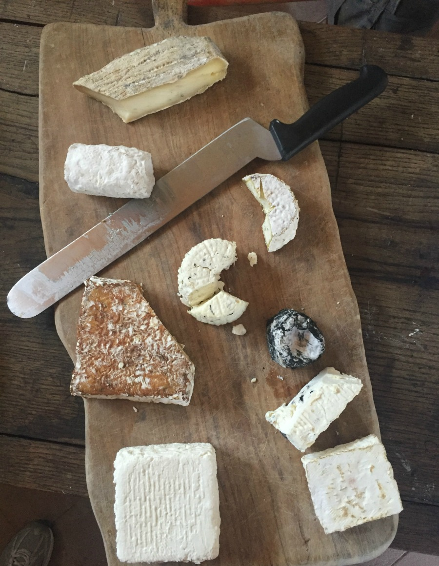 Variety of goat cheese made in Greve in Chianti | Slow Travel in Tuscany with Km Zero Tours | BrowsingItaly.com