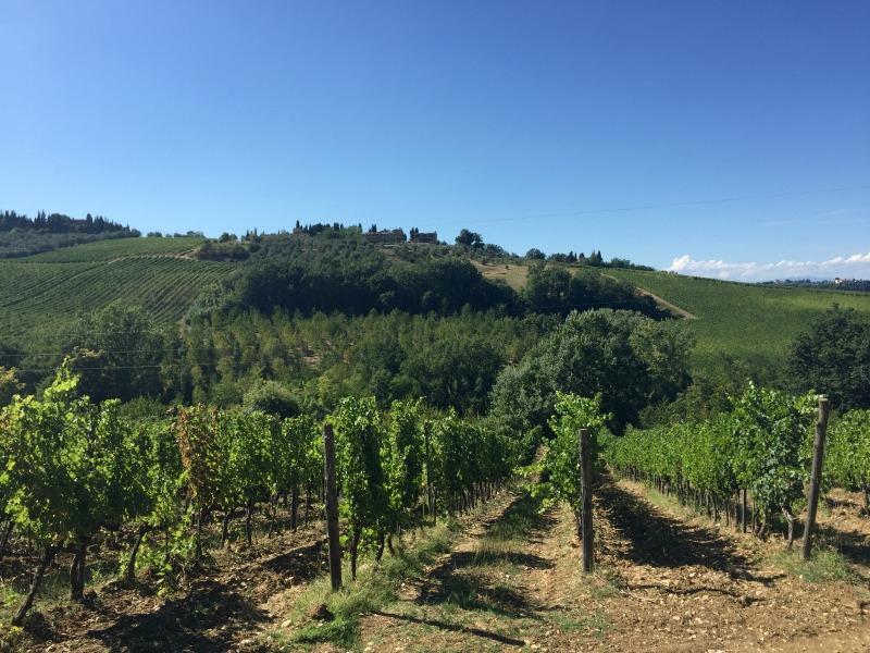 Il Bacio Winery in Chianti, Tuscany | Slow Travel in Tuscany with Km Zero Tours | BrowsingItaly.com