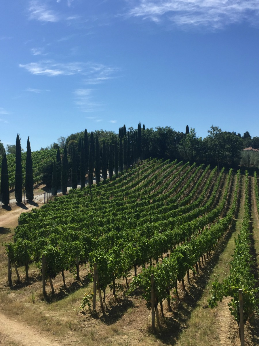 Vineyard near the town of San Gimignano, Tuscany | Slow Travel in Tuscany with Km Zero Tours | BrowsingItaly.com