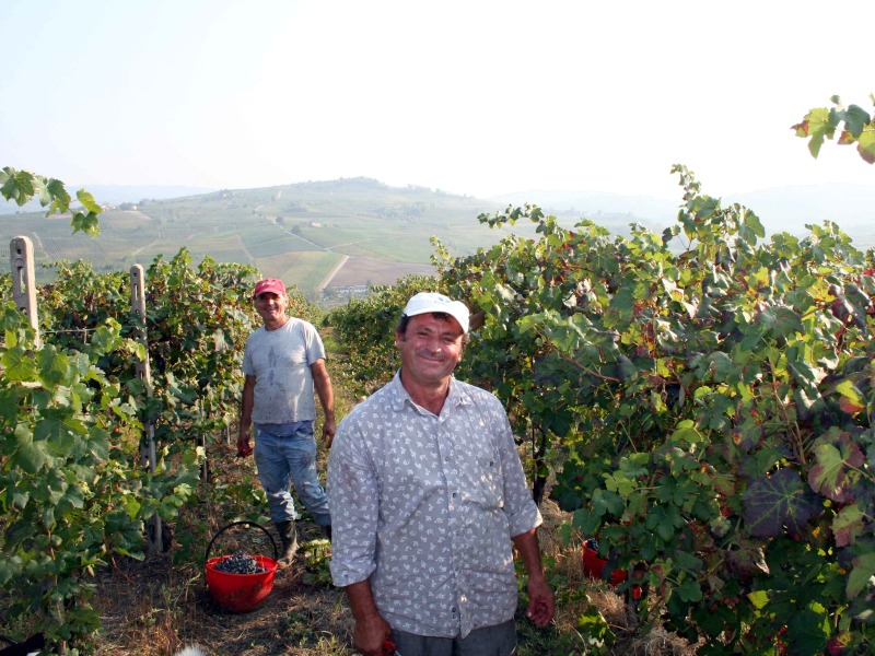 Vendemmia in Oltrepo Pavese