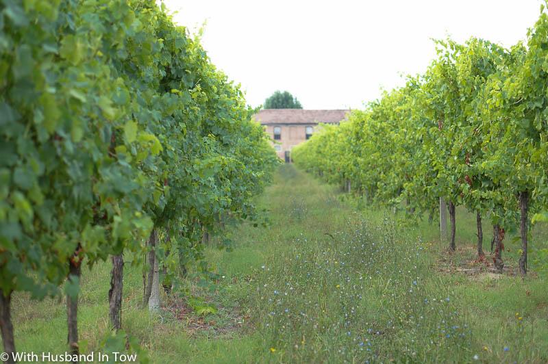 How to Experience La Dolce Vita in Emilia Romagna | Branchini Romagna Winery