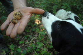 Truffle Hunting in Agnone, Molise