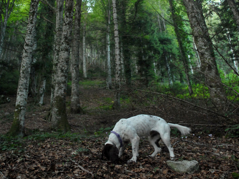 Truffle hunting in Agnone, Molise by Live and Learn Italian http://liveandlearnitalian.com/